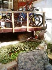 Roger's bikes web