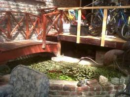 Roger's pond web